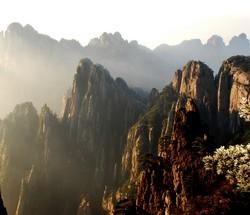 huangshan-maofeng
