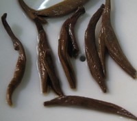 yunnan gold tea